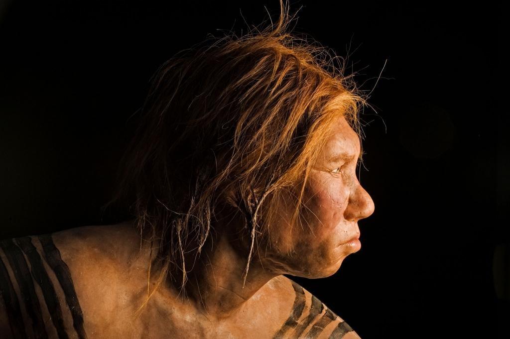 Особенности мозга неандертальцев